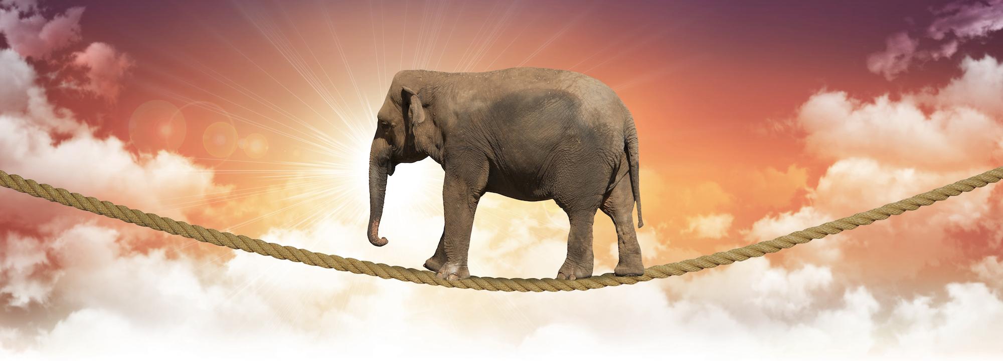 ElefantaufSeil1